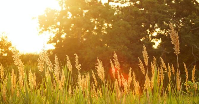 InterVarsity update & Jesus in His Glory