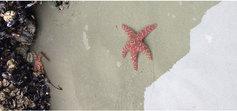 Starfish 670x350
