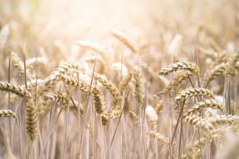 Bread From Heaven Part 2