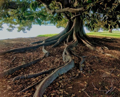 ROOTED IN THE CHRISTAIN FAITH