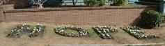Hope garden at st monicas
