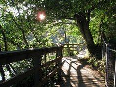 Retreat trails