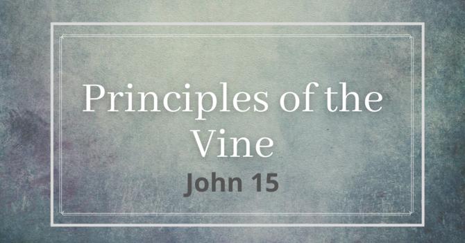 Principles of the Vine, part 2