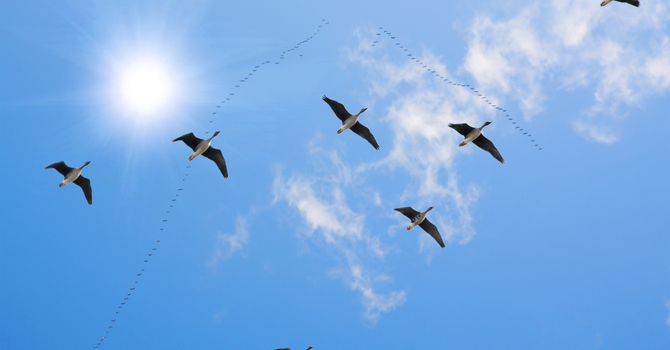 Lessons from the geese image