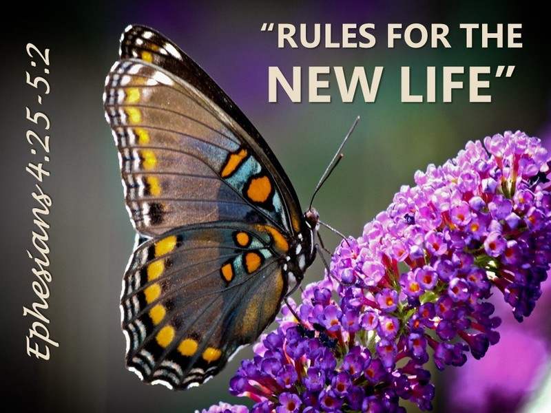Rules for the New Life