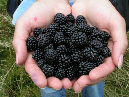 Ongoing  Blackberry Festival Activities