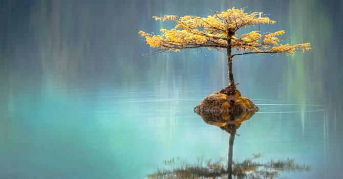 Serenity Meditation returns online.