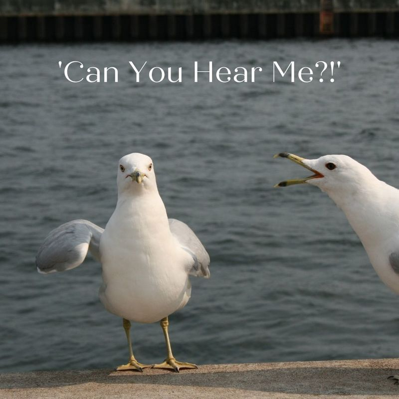 'Can You Hear Me?!'