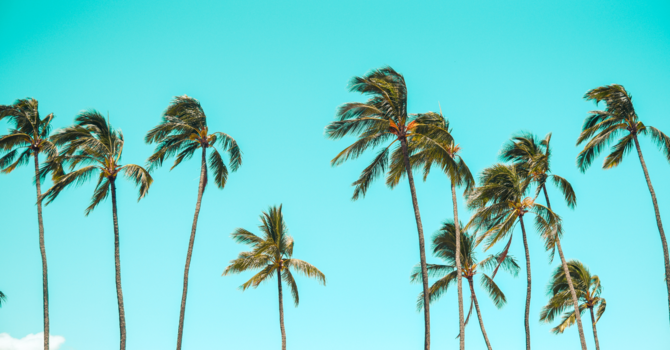 Called To Be Palm Trees! image