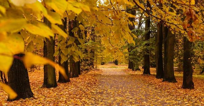 Being Trees in Autumn image