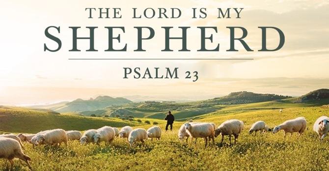 My Choice-My Shepherd