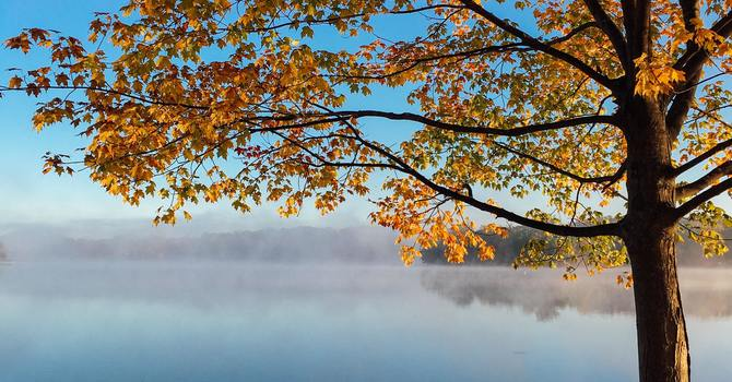 Service Bulletin: October 24, 2021. Twenty-Second Sunday After Pentecost. image