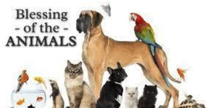 Pentecost 19 & Blessing of the Animals image