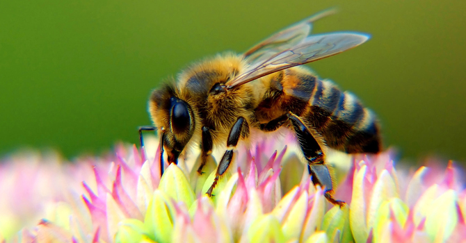 Training Bees for Science image