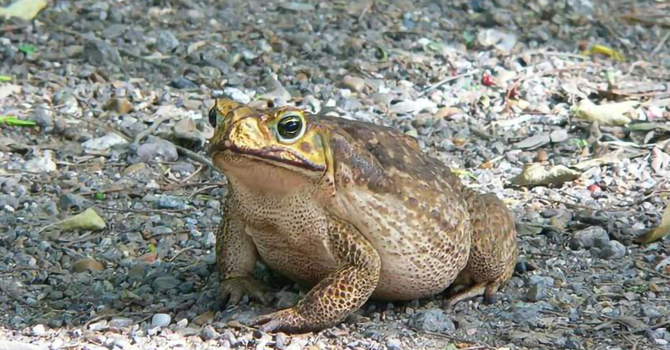 Why Did the Frog Cross the Road? image
