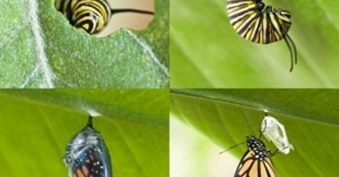Biblical Stewardship - Fall Bulletin image