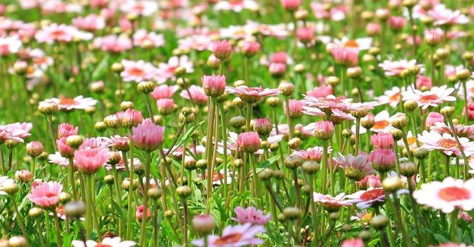 Garden of thanks