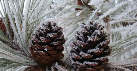 Christmas Crafting with Pinecones