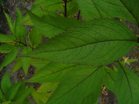 Wild Lectionary: An Ecological Preaching Resource