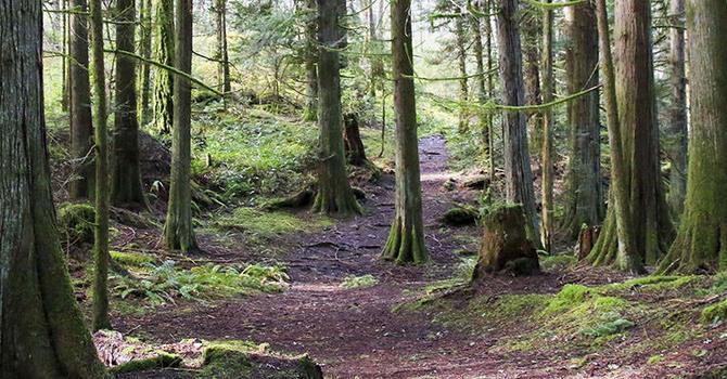 Forest Walk Field Trip