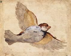 Giovanni da udine   study of a flying sparrow   wga09431